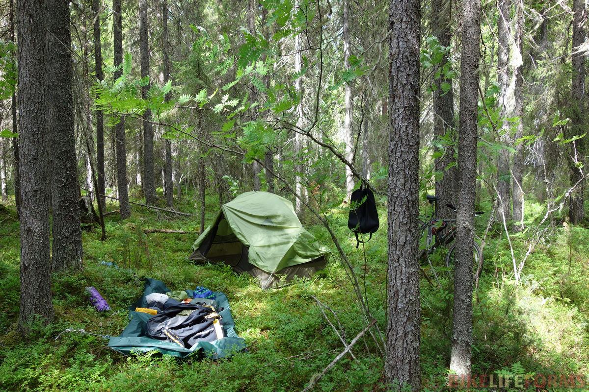 палатка у болота...