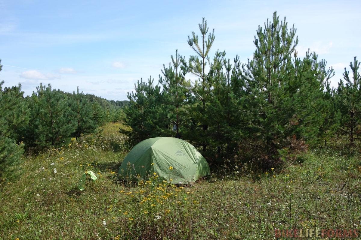 палатка у сосенок