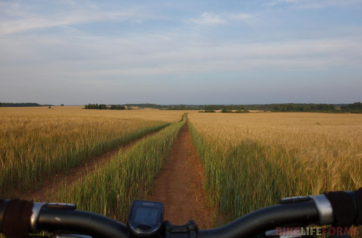 поле ячменя