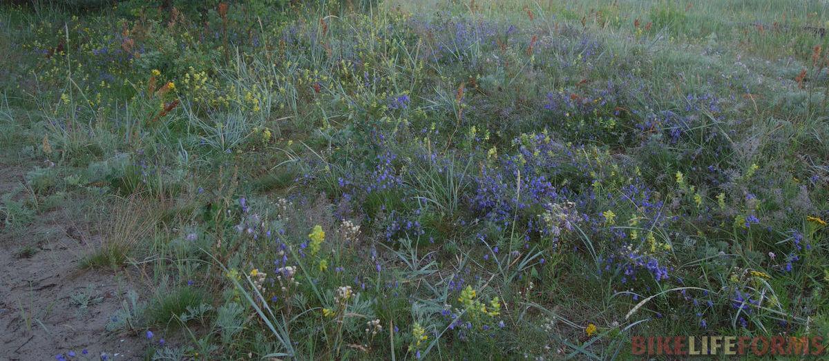 травы полосы прибоя