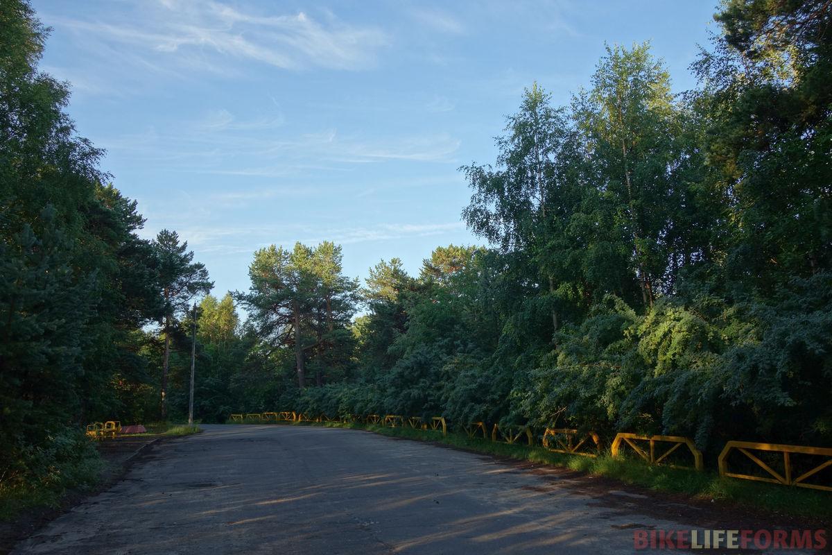 караганы в парке на о. Ягры